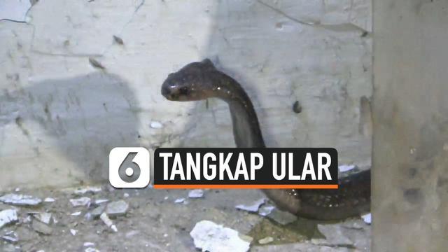 tangkap ular