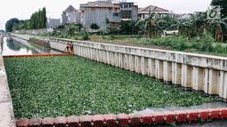 Petugas beraktivitas di sekitar lokasi uji coba tanaman eceng gondok di Kali Inlet 3, Tanjung Priok, Jakarta, Selasa (4/12). Eceng gondok mulai ditanam Pemprov DKI sebagai salah satu strategi membersihkan sungai di Jakut. (Liputan6.com/Immanuel Antonius)