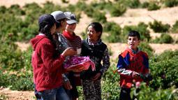 Anak-anak Suriah ambil bagian dalam proses pemetikan Damask atau Mawar Damask (Damascene Rose) yang populer di Kota al-Marah, sebelah utara ibu kota Damaskus, Suriah, (27/5/2020). (Xinhua/Ammar Safarjalani)