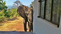 Seekor gajah yang terluka mendatangi tempat penginapan di Zimbabwe, seakan ingin mengadukan lukanya. (Sumber Yayasan Bumi Hills via news.com.au)