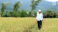 Presiden Jokowi berjalan di tengah sawah saat meninjau irigasi di Desa Waimital, Kecamatan Kairatu, Kabupaten Seram Bagian Barat (14/2). Program tersebut diharapkan Jokowi bisa meningkatkan daya beli masyarakat. (Liputan6.com/Pool/Biro Pers Setpres)