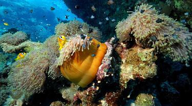 Ilustrasi keindahan bawah laut.