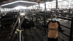 Pekerja membawa sapi yang akan dijadikan hewan kurban di RPH PD Dharma Jaya, Cakung, Jakarta, Kamis (30/7/2020). Persiapan dilakukan seperti pembersihan rutin kandang dan tempat pemotongan, mendata kesehatan hewan, serta mendirikan tempat pemotongan tambahan. (merdeka.com/Iqbal S. Nugroho)