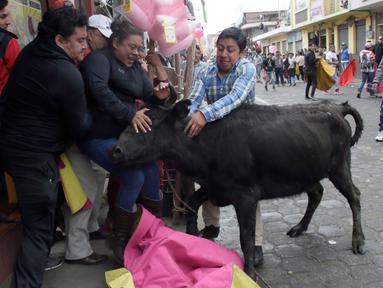 Seekor banteng muda dielus-elus oleh para penonton dalam acara lari dikejar banteng di Pillaro, Ekuador, 4 Agustus 2018. Dalam acara ini, lusinan banteng dilepas dan berlari menabraki para pengunjung yang memadati jalan. (AP/Dolores Ochoa)