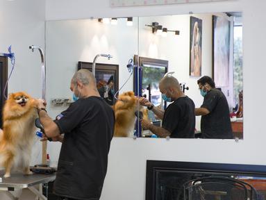 Pekerja menangani anjing di salon perawatan hewan peliharaan di Plano, Kota Dallas, Texas, Amerika Serikat, Jumat (1/5/2020). Texas secara bertahap mulai kembali membuka kegiatan bisnis pada 1 Mei 2020. (Xinhua/Tian Dan)