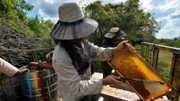 Peternak mengumpulkan madu dari sarang lebah di sebuah peternakan di Navajas, Matanzas, Kuba, 21 Maret 2019. Tempat ini menyimpan banyak bunga liar yang menjadi makanan lebah. (YAMIL LAGE/AFP)