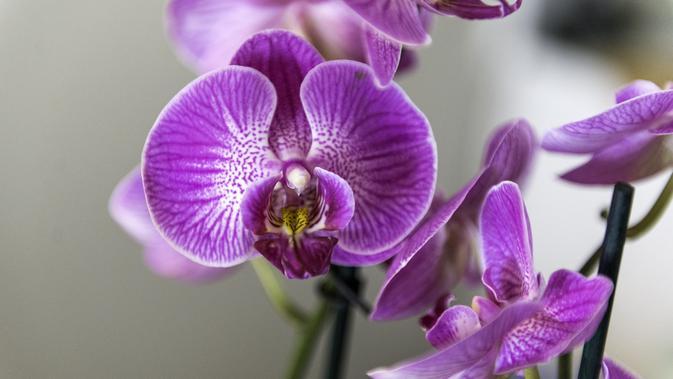 5 Ciri Khusus Bunga Anggrek Sebagai Tanaman Hias Yang Eksotis Hot Liputan6 Com
