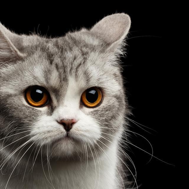 Download 65+  Gambar Kucing Sedang Sedih Lucu Gratis