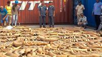 ihak berwenang Kamboja menyita 3 ton gading Afrika dalam peti kemas tanpa keterangan di pelabuhan Phnom Penh (AFP)
