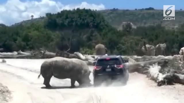 Insiden ini terjadi ketika sebuah mobil keluarga yang sedang mengunjungi kebun binatang Africam Safari di Puebla, Meksiko, tiba-tiba diserang oleh seekor badak.