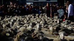 Warga menyaksikan kawanan domba dengan diawasi penggembala tumpah ruah di jalanan pusat kota Madrid, Spanyol, Minggu (22/10). Peristiwa tersebut adalah sebuah tradisi kuno yang sudah terjadi pada tahun 1273. (PIERRE-PHILIPPE MARCOU/AFP)