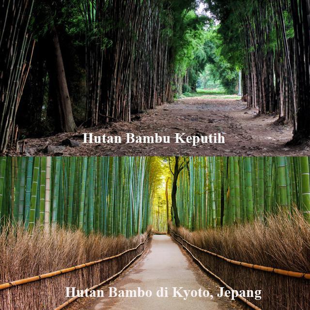 Hutan Bambu Keputih.