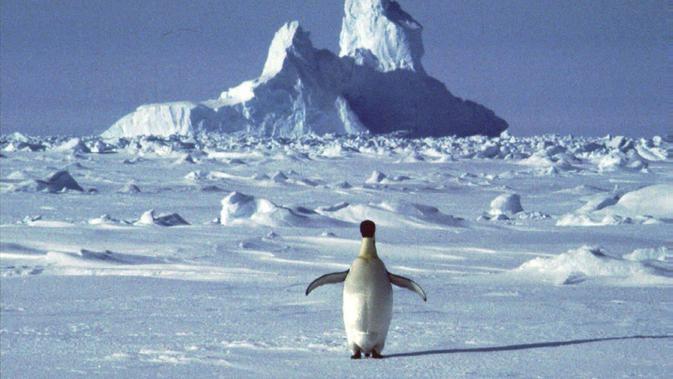 Cerita Perempuan Terjebak Perjalanan Kapal Pesiar di Antartika Akibat  Pandemi Corona COVID-19 - Lifestyle Liputan6.com